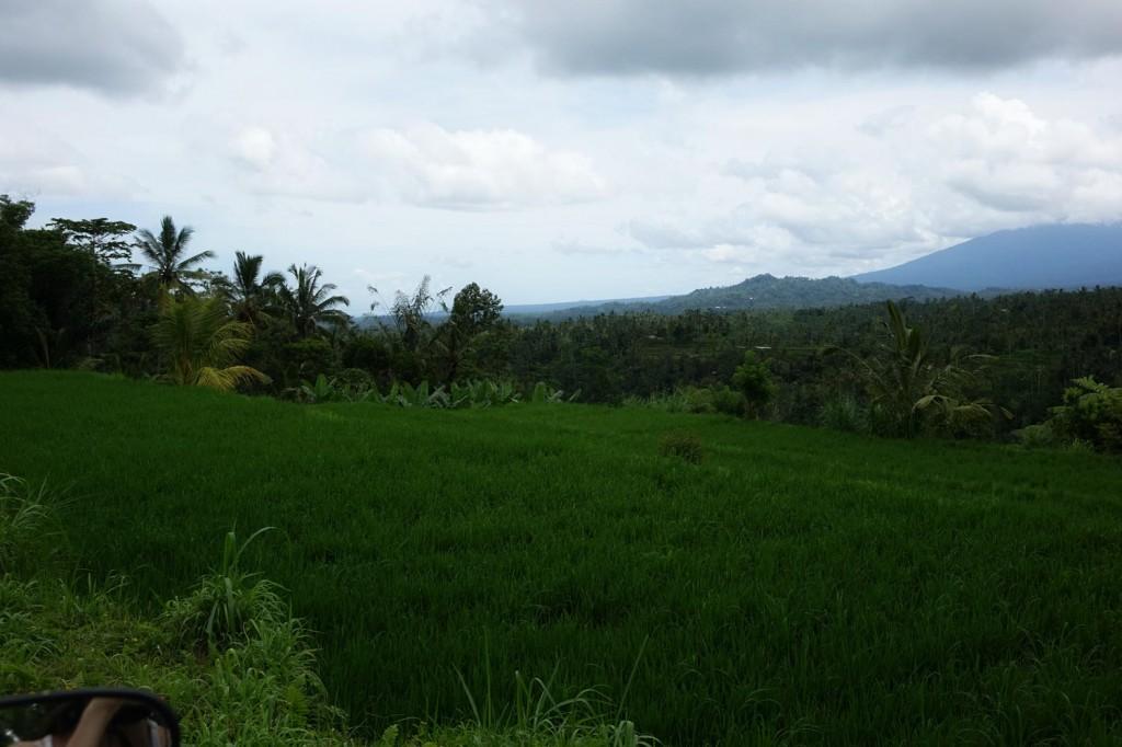 Rizières nord ubud bali indonésie
