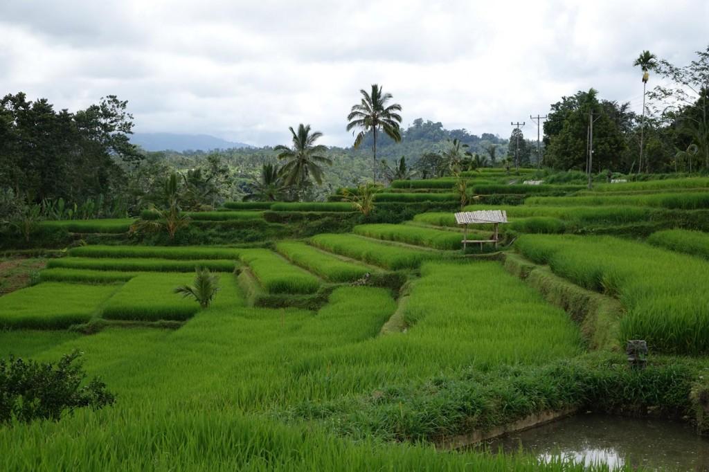 rizières route scooter bali indonésie ubud