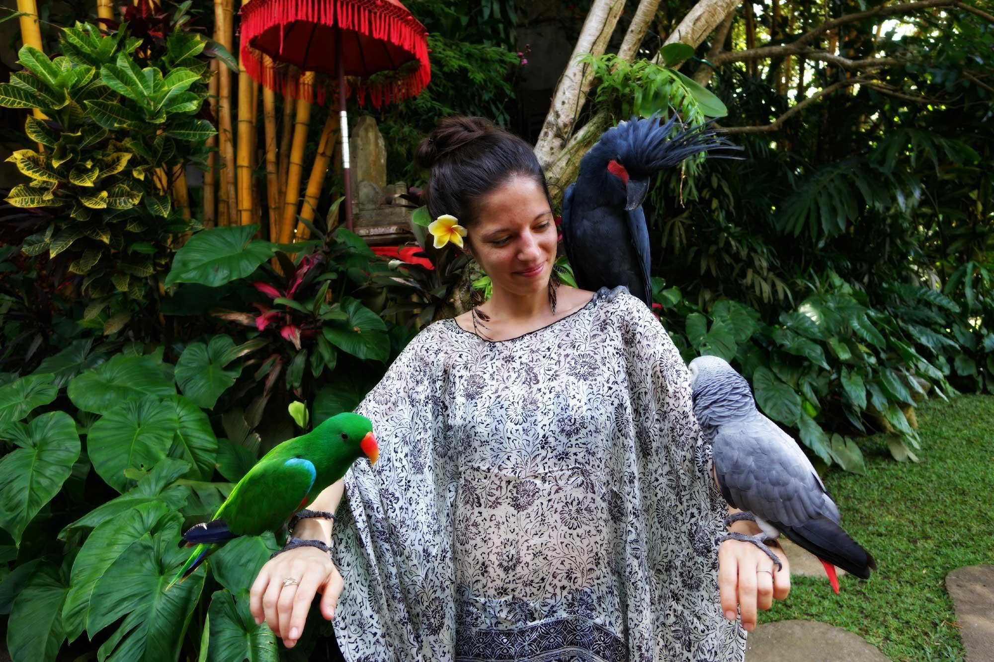Perroquets antonio blanco-museum-ubud