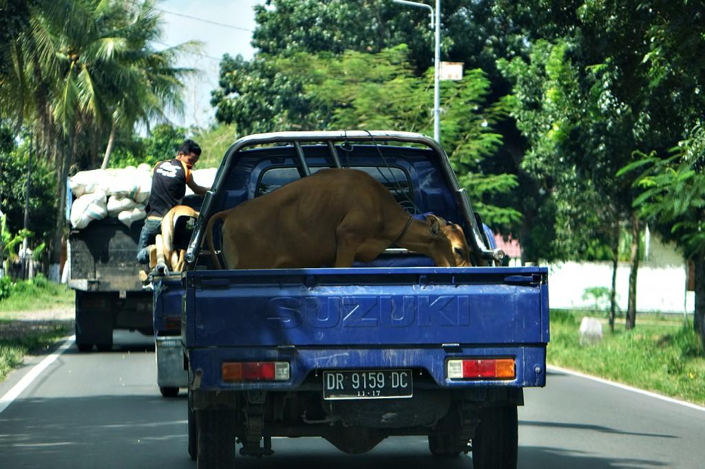 transport lombok