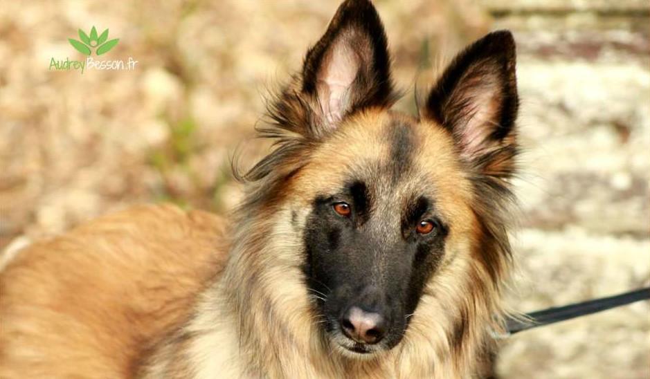 au hasard d une rencontre chien tervueren parc maurepas rennes