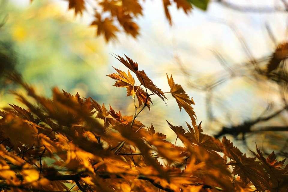 automne-feuilles-tombent-bilan