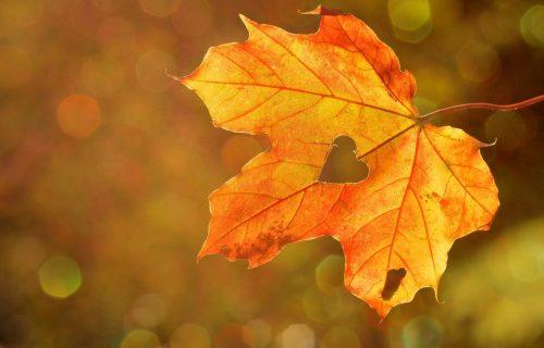 L'énergie De L'automne, Le Temps De Se Reposer Et De Faire Le Bilan Chinoise