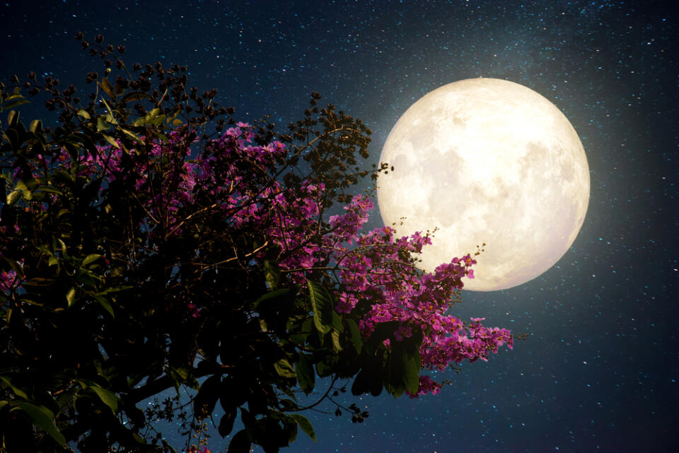 La Super Pleine Lune Du 27 Avril 2021